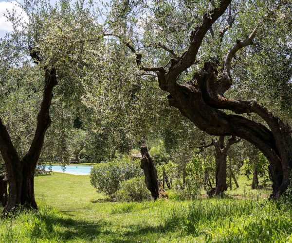 The-olive-trees-and-the-pool_MG_4113
