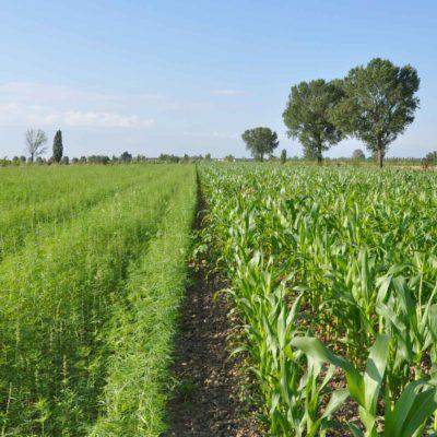 villa-giulia-azienda-agricola-panorama_cover